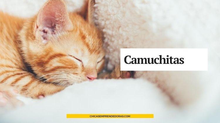 Camuchitas: Camitas Para Perros y Gatos